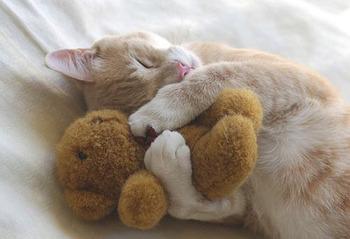 Cat-Nap-Time-l.jpg