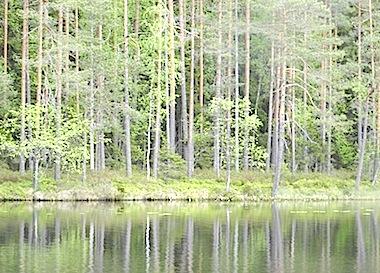 ヘルシンキの森
