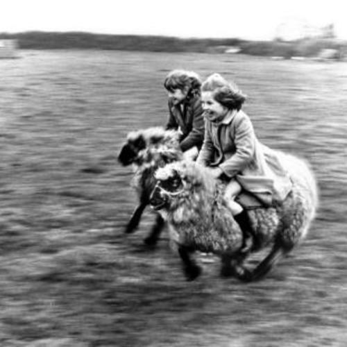31(羊さんに乗る)image