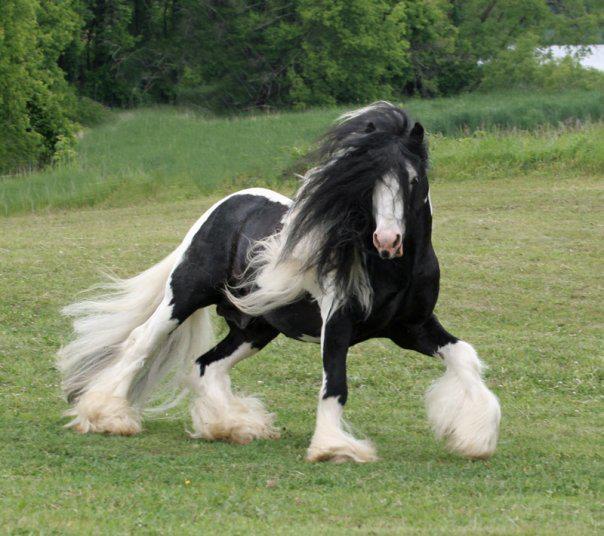 31(乱れ髪の馬さん)image