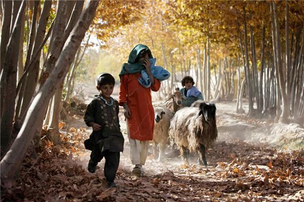 新年(アフガニスタンのヒツジさん)image