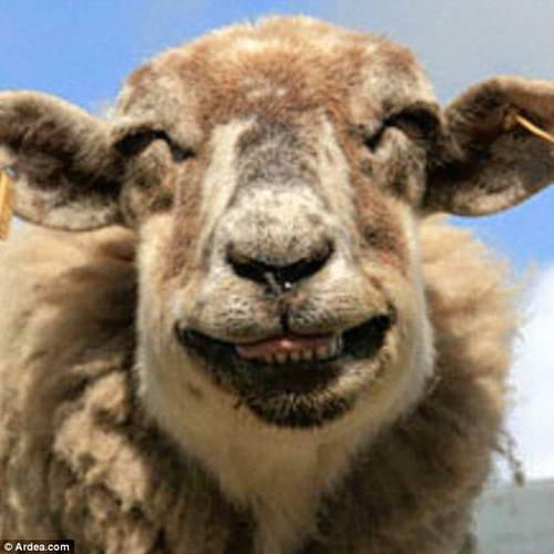 新年(笑う羊)image