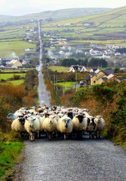 新年(羊さんのいる真っ直ぐな道)image