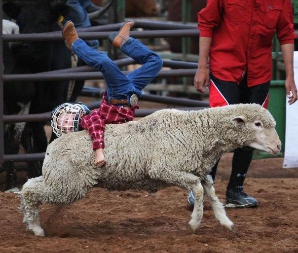 新年(羊さんに乗る3)image