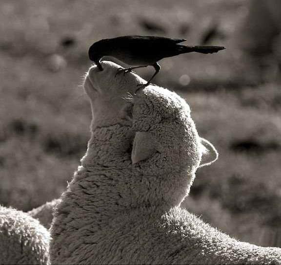 新年(羊さんの鼻と鳥さん)image