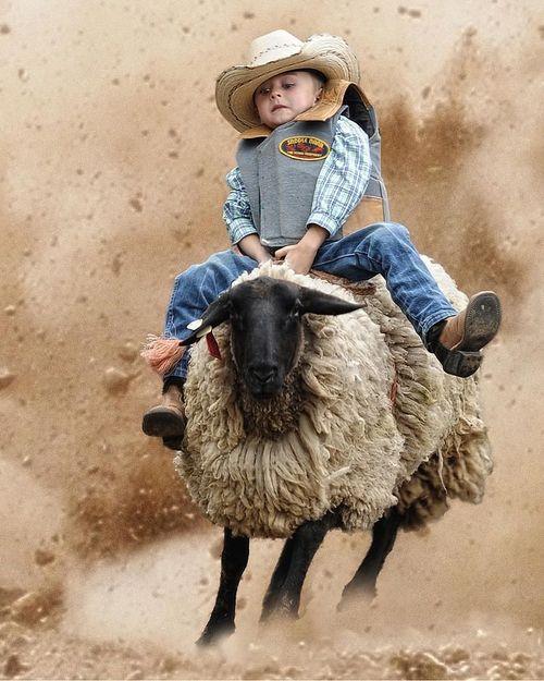 新年(羊さんを乗りこなす)image