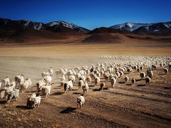 新年(羊の群れ)image