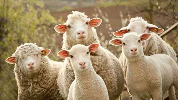 新年(羊さん正面から)image