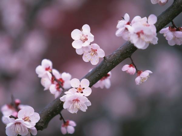 桜(とある1枚)image
