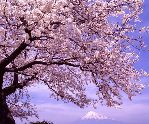 桜(富士山と)image_convert_20150218230104