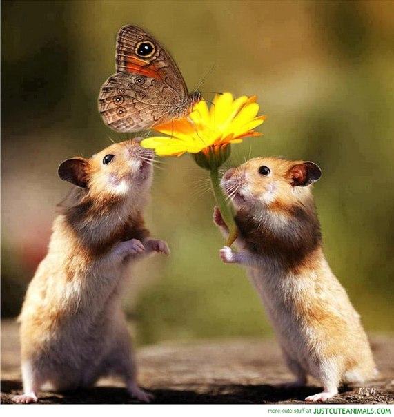 上記(修飾用ねずさんと花と蝶さん)image