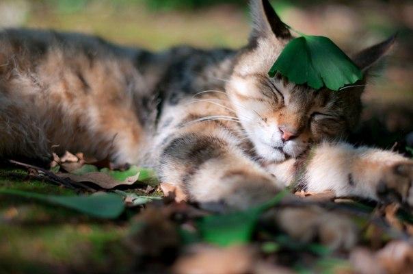 上記(修飾用平和な眠り)image