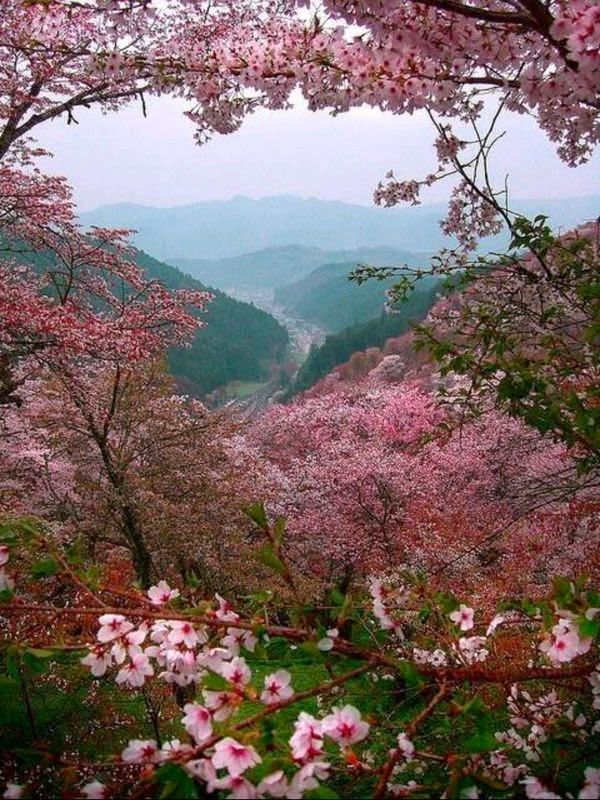 身体(修飾画吉野の桜)image