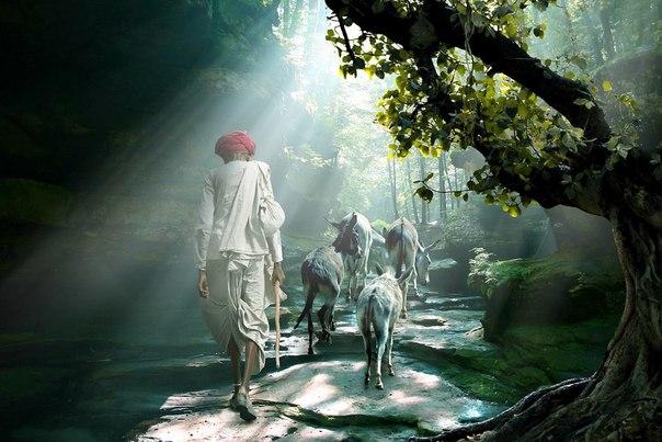 スパイ(修飾画像とある森のなかで)image