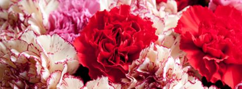 想い(薔薇の花)imgae