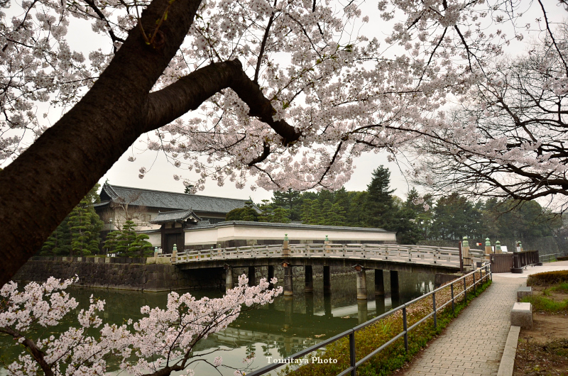 平川門と桜