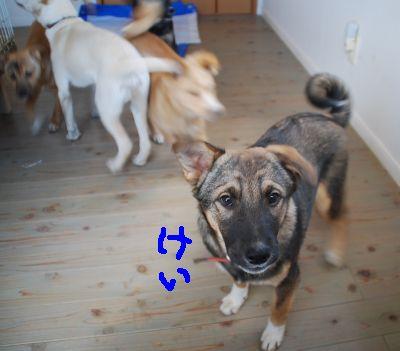 150108子犬 (2)