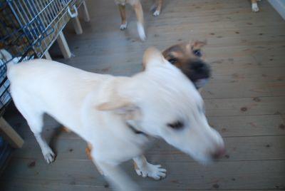 150108子犬 (21)