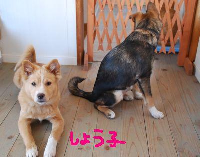 150108子犬 (39)