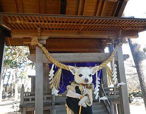 霊犬神社4