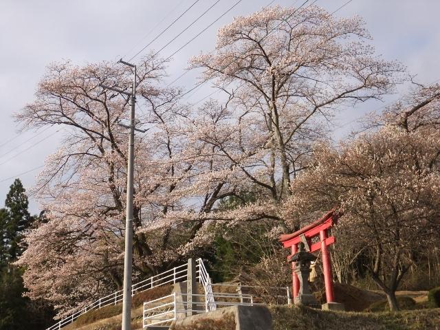 27-04-09 南福島桜 fuji 012 (640x480)