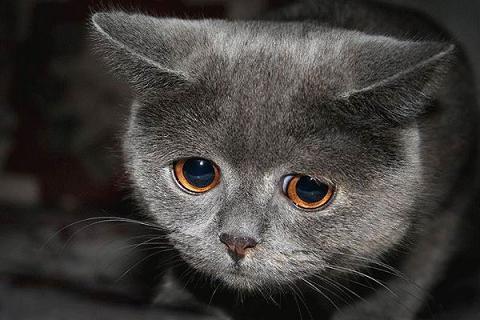 cry_cat.jpg