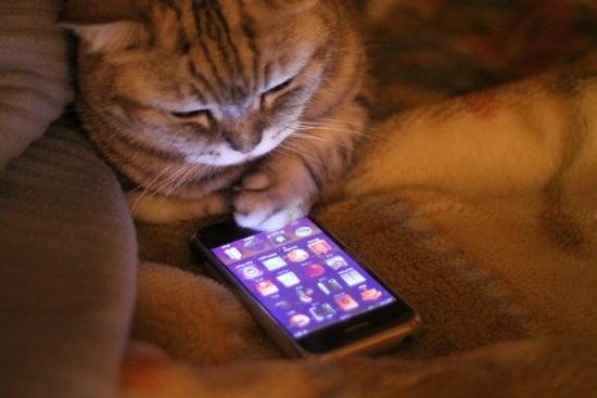 smartphone_cat.jpg