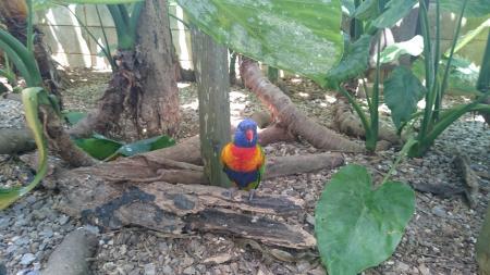 沖縄フルーツランドの鳥さん