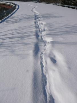 人の足跡の上に足跡が…