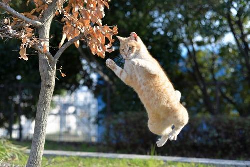 JUMP 猫