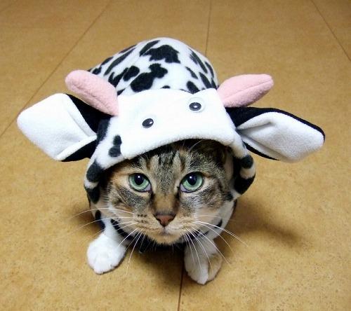 変装した猫