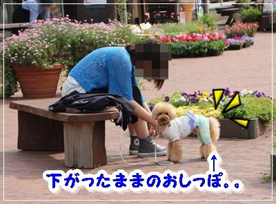IMG_8471 (2)