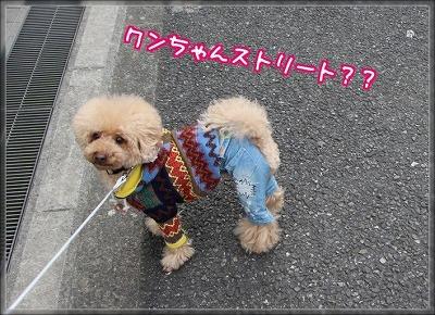 2Tq2L0Qg8DrMkQT1426617750_1426617930.jpg
