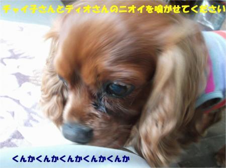 010_convert_20150220194450.jpg