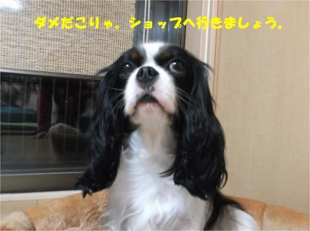 03_convert_20150113182521.jpg