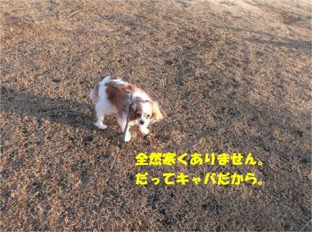 03_convert_20150202184229.jpg