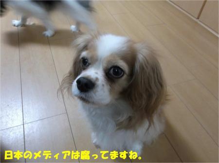 03_convert_20150205175710.jpg