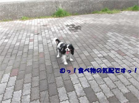 03_convert_20150421181949.jpg