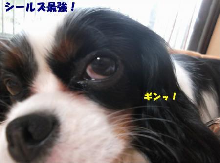 04_convert_20150108183043.jpg