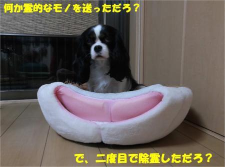 05_convert_20150113182539.jpg