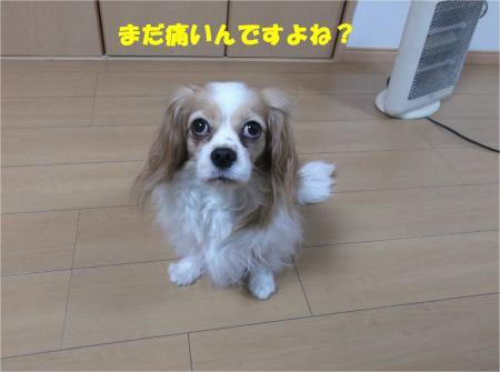 06_convert_20150123185218.jpg