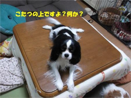 07_convert_20150209184443.jpg