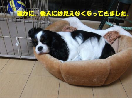 07_convert_20150213194434.jpg