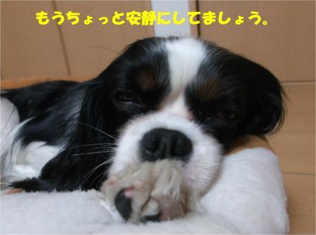 08_convert_20150107173053.jpg