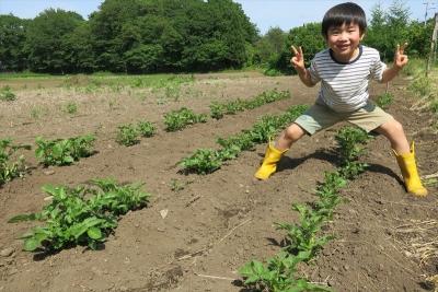 1ヒロジャガイモ畑_R