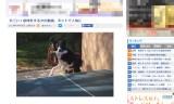 すごい!卓球をする犬の動画ネットで人気に