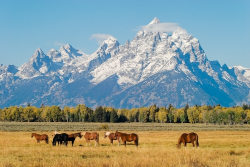 Grand_Teton_National_Park_original_7440.jpg