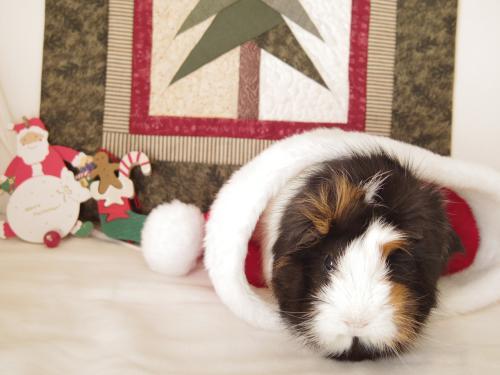 Merry Christmas! 2014 1