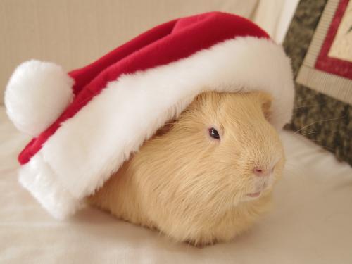 クリスマス撮影秘話7