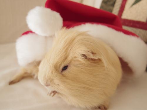 クリスマス撮影秘話8